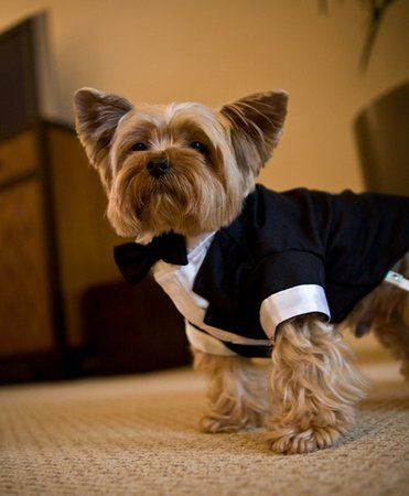Instagram-Worthy Ways to Include Your Dog in the Wedding