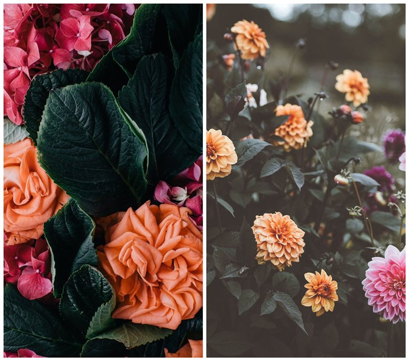 30 Floral Iphone Wallpapers And Backgrounds